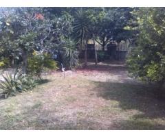 vendo casa campestre en Bejuma-Carabobo - Imagen 4/6