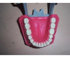 typodont - Imagen 4/6