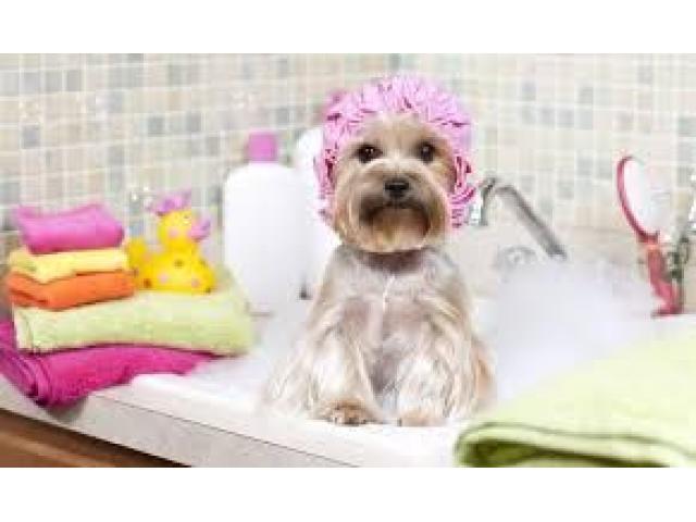 servicio peluqueria canina a DOMICILIO - 1/1