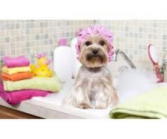servicio peluqueria canina a DOMICILIO