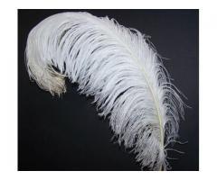 plumas de avestruz para decoración y carnavales