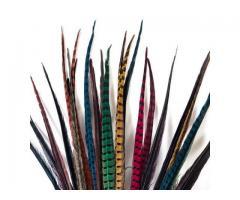 plumas de faisán de carnaval