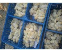 venta de pollito bb y pollo benefiaciado - Imagen 5/6