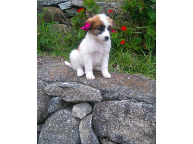 Venta bellos cachorros varias razas - 4/4