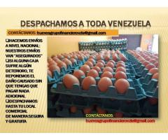 HUEVOS AL MAYOR EN VALENCIA SIN INTERMEDIARIOS - Imagen 4/6