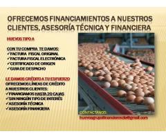 HUEVOS AL MAYOR EN VALENCIA SIN INTERMEDIARIOS - Imagen 5/6