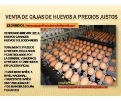 HUEVOS AL MAYOR EN VALENCIA SIN INTERMEDIARIOS - Imagen 6/6