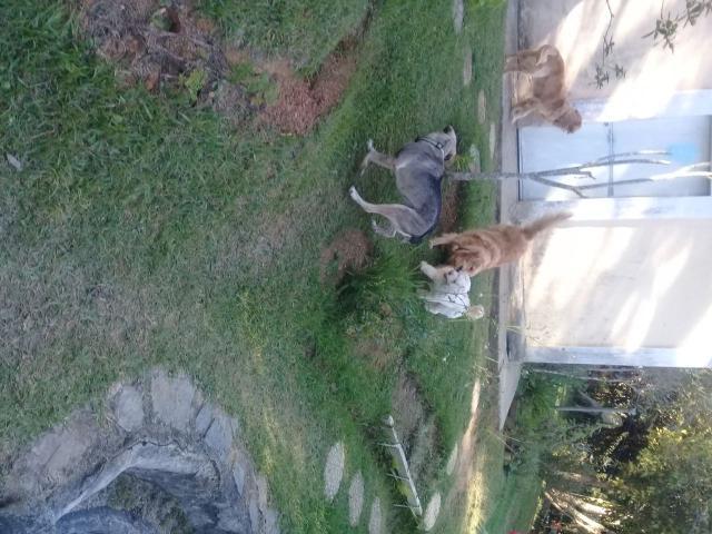 Posada de Mascotas - 2/5