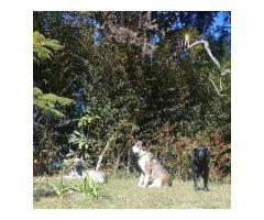 Posada de Mascotas - Imagen 4/5