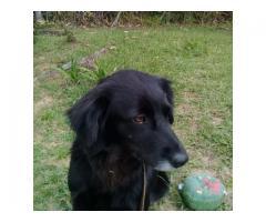 Posada de Mascotas - Imagen 5/5