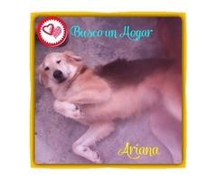 Perritos En Adopción Buscan Hogar Cálido Y Responsable - Imagen 1/6