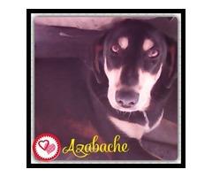 Perritos En Adopción Buscan Hogar Cálido Y Responsable - Imagen 2/6
