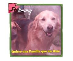 Perritos En Adopción Buscan Hogar Cálido Y Responsable - Imagen 3/6