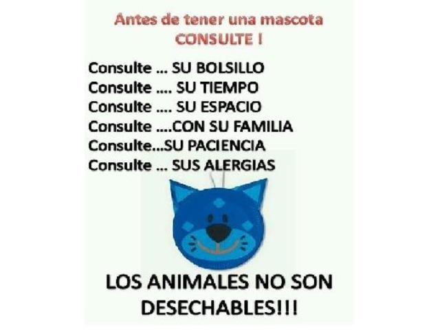 Perritos En Adopción Buscan Hogar Cálido Y Responsable - 6/6