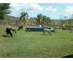 Vendo Finca en Plena Produccion