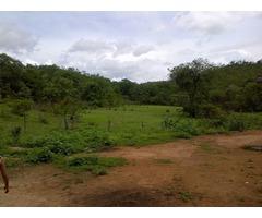 Rancho La Enramada Venta Finca En Ortiz Guarico