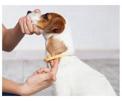 """Collar para Perros Anti Pulgas Y Garrapatas Marca Hartz UltraGuard de 20"""""""