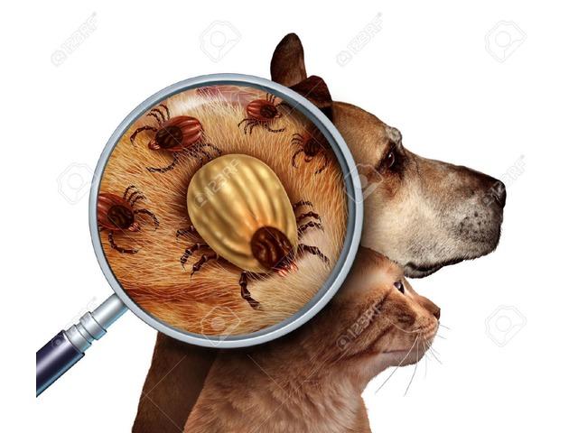 Tratamiento Garrapaticida para sus Mascotas - 2/4