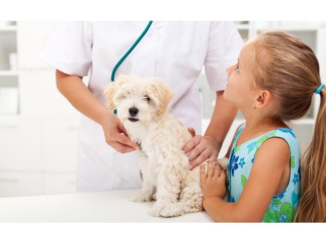 Tratamiento Garrapaticida para sus Mascotas - 4/4
