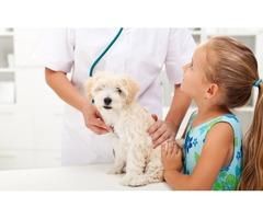 Tratamiento Garrapaticida para sus Mascotas - Imagen 4/4