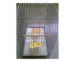 Jaula para periquitos y aves pequeñas con accesorios