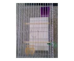 Jaula para aves pequeñas y medianas con accesorios