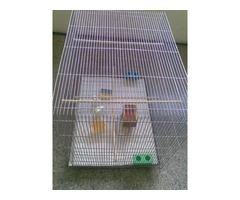 Jaula Grande para aves con accesorios - Imagen 3/4