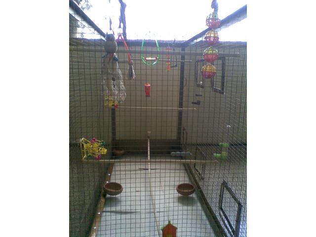 Jaula voladora con mucho espacio ideal para periquitos - 1/6