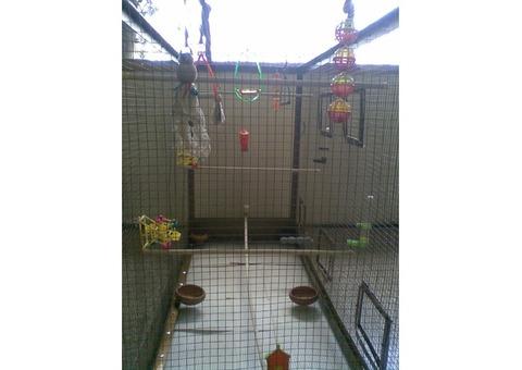 Jaula voladora con mucho espacio ideal para periquitos