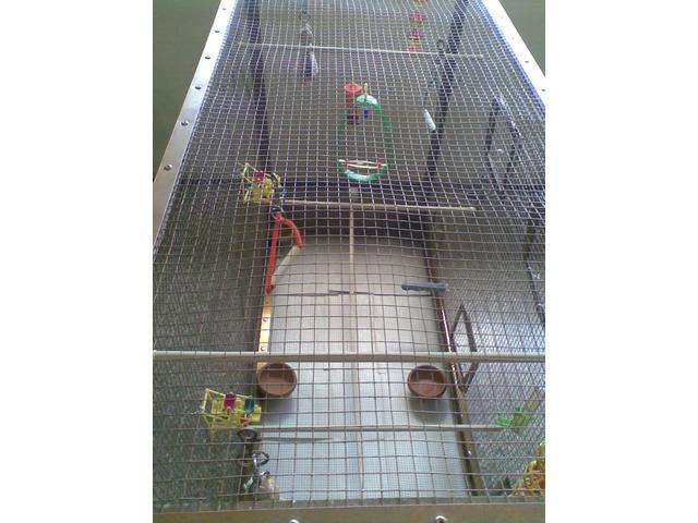 Jaula voladora con mucho espacio ideal para periquitos - 2/6