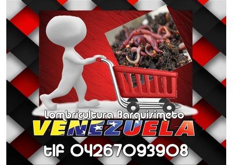 Lombrices Californianas en Venezuela, Lombrricultura Barquisimeto tlf 04267093808