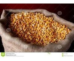 maiz  por sacos