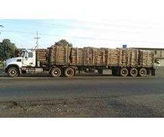 venta de estantillos de eucalipto - Imagen 2/4