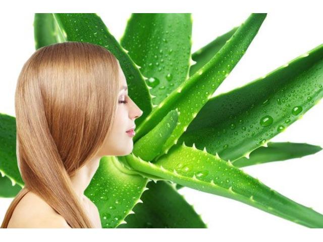 Shampoo De Aloe Vera Con Cayena 45 ML - 3/5