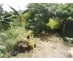 terreno con matas frutales en constrccion - Imagen 2/5