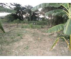 terreno con matas frutales en constrccion - Imagen 3/5