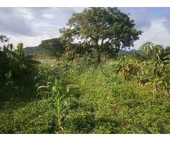 terreno con matas frutales en constrccion - Imagen 5/5