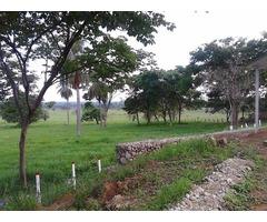 VENDO GRANJA EN BARINAS DE 1.5 HECTAREA CON CASA NUEVA